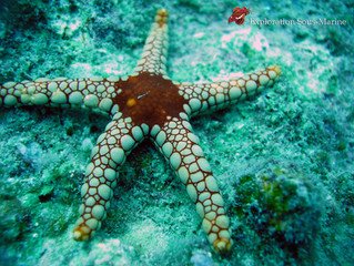 Starfish / Étoile de mer