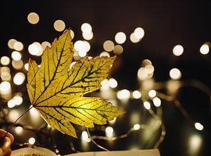 November Featured Specials