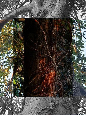 soul of a tree 1.jpg