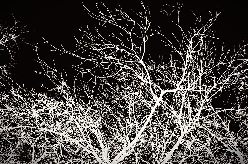 branches_edited.jpg