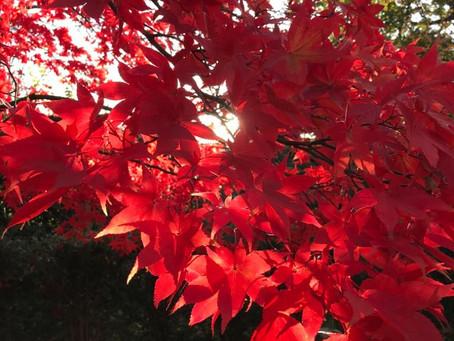 In Praise of Autumn