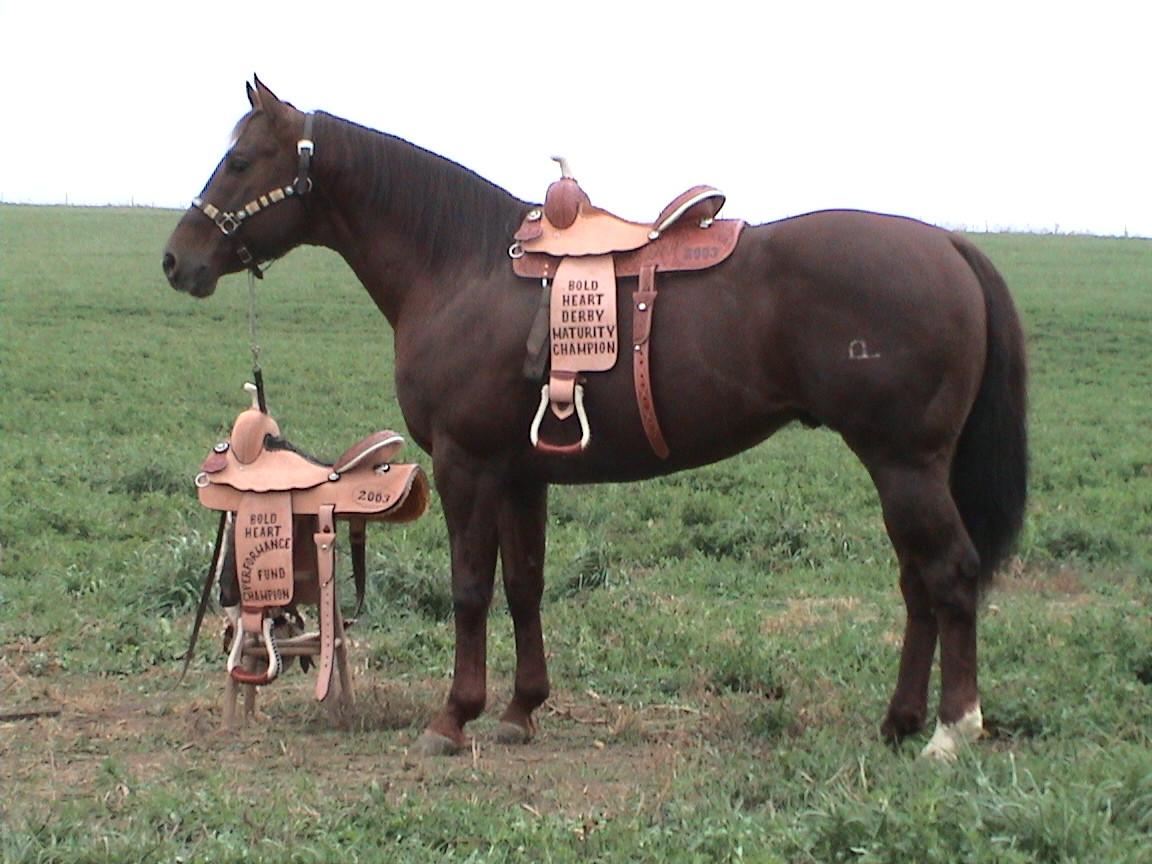 horses 053.jpg