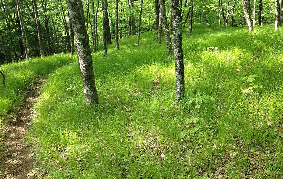 Grassy-trail.jpg