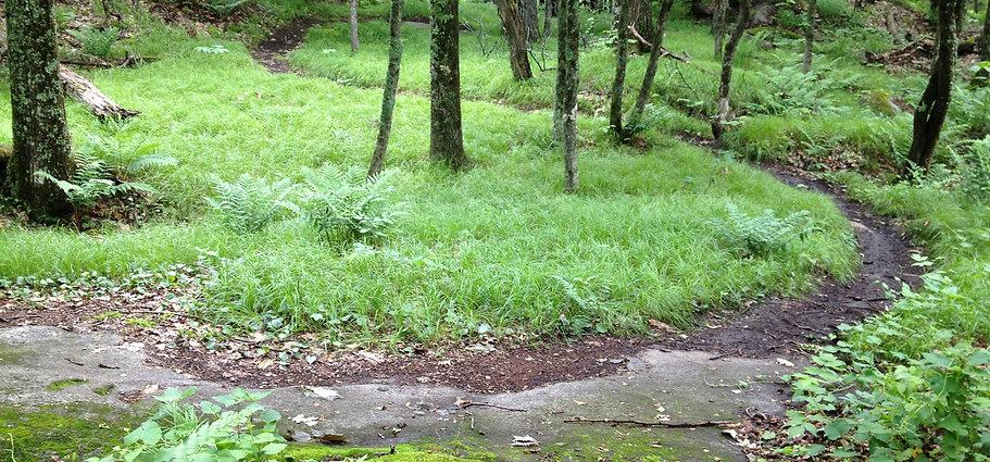 Grassy-singletrack.jpg
