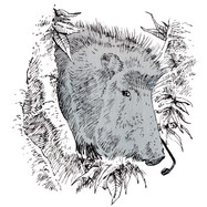 SZ-Wissen / Tierrekorde