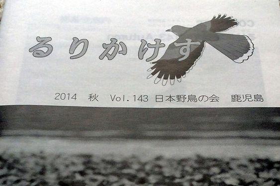 WBSJkagoshima.jpg