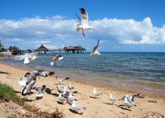 Caledonian Sea