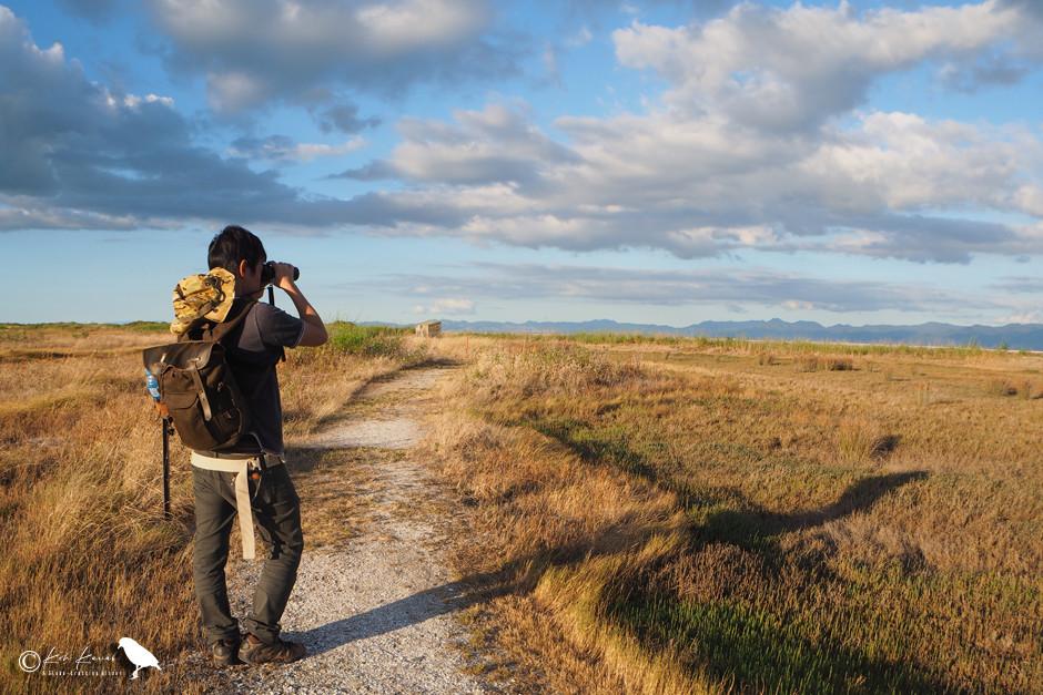Birding at New Zealand