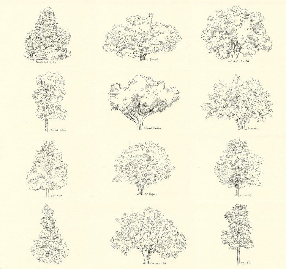 Trees-all-s.jpg