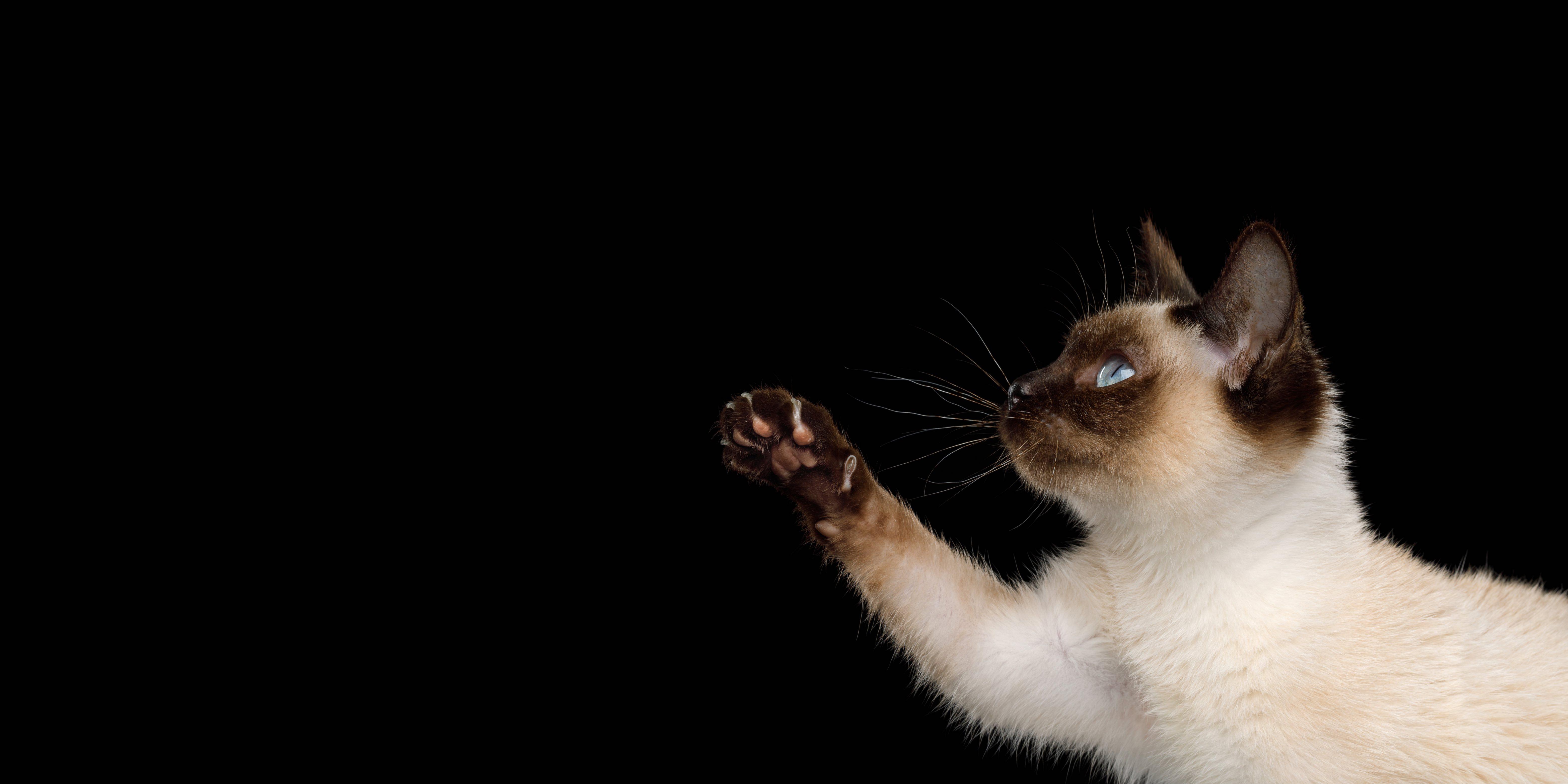 cat2head