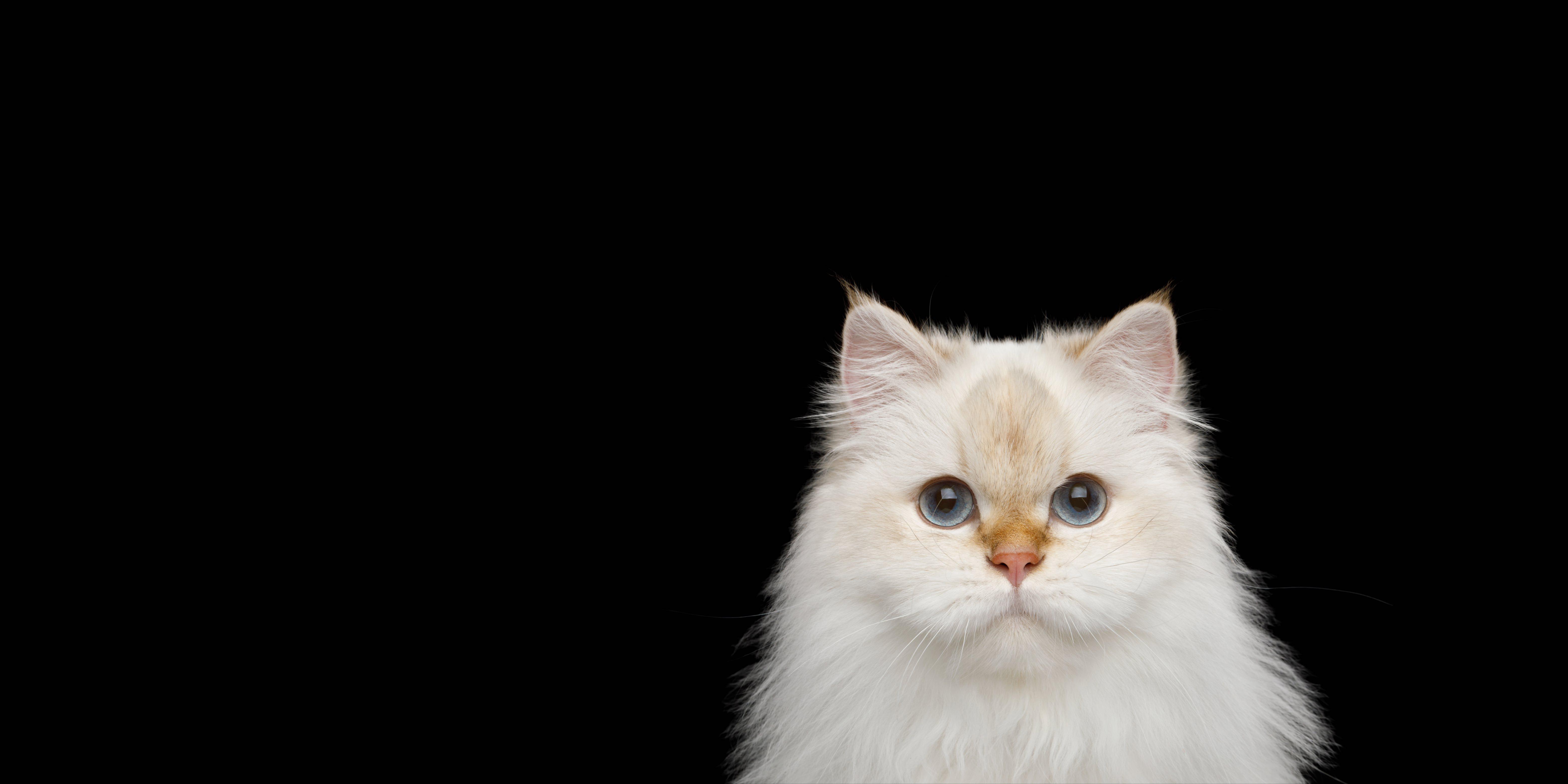 cat1head