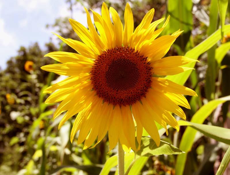 Agrofloresta_Eva_e_Adão_outubro_2013_(2).jpg