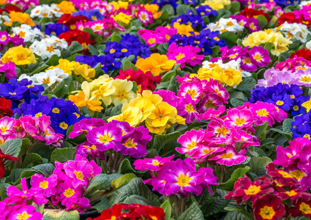 New Flowers Spring 2019
