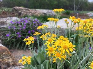 bot garden flowers.jpg