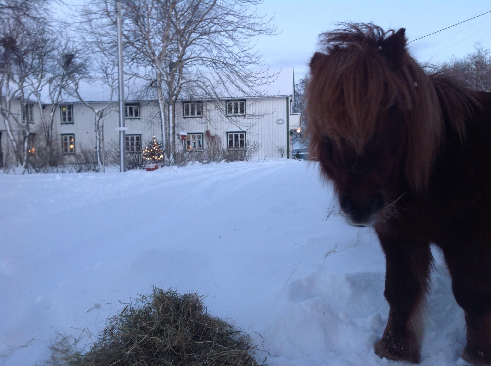 Vinter på Skagen Gaard