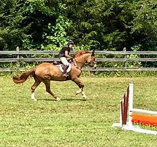 Gray Horse - Terry Adcock.jpg