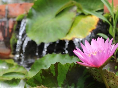 SNG写真部で東南植物楽園へ行ってきました。蓮水連巡り。