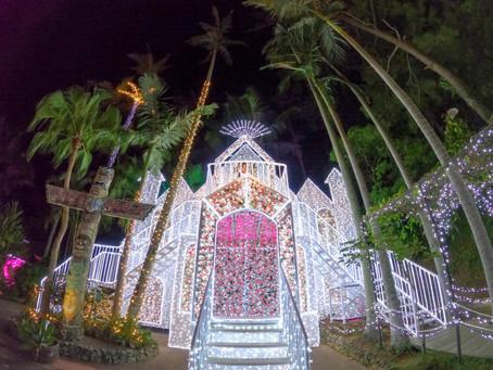 【280万級の光】東南植物楽園、ひかりの散歩道に行ってきました。沖縄県沖縄市