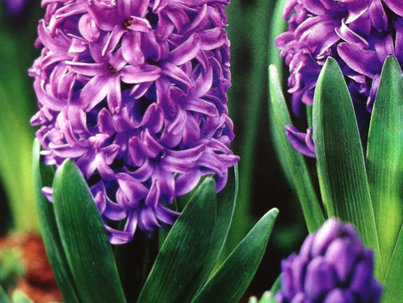 Plant Now for Spring Color!