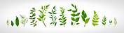 line-of-plants-shutterstock_750452269.png
