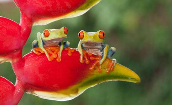 Frogs 1.jpg