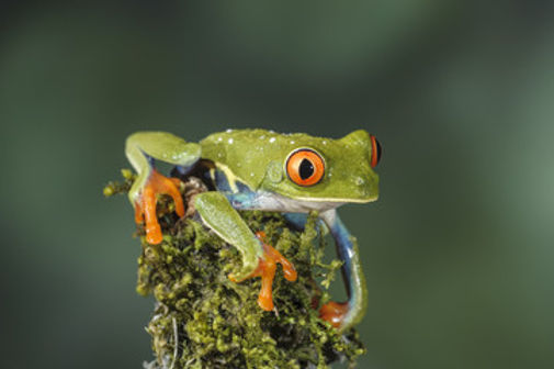 Frogs 2.jpg