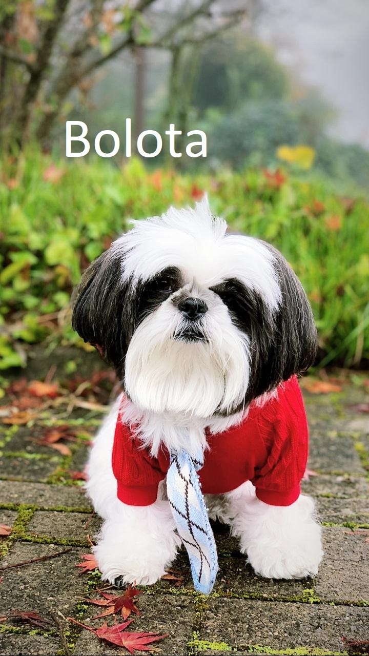 Bolota (00000002)