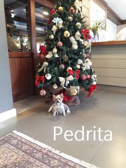 Pedrita12.20