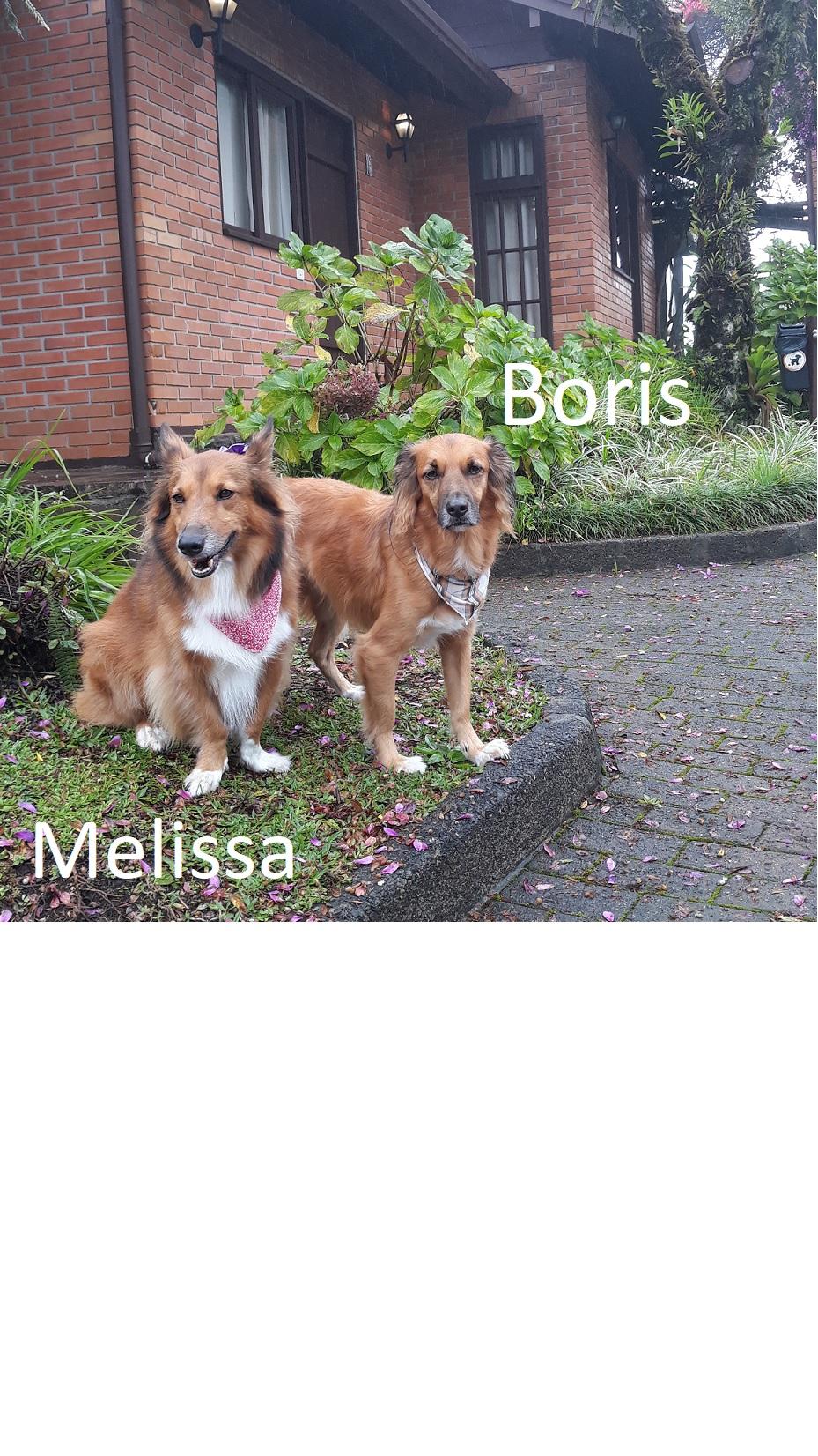 Boris Melissa