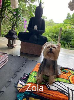 zola meditando (1)
