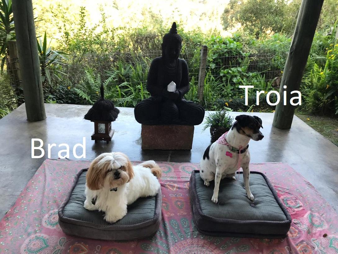 Brad e Troia