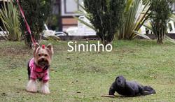 sininho