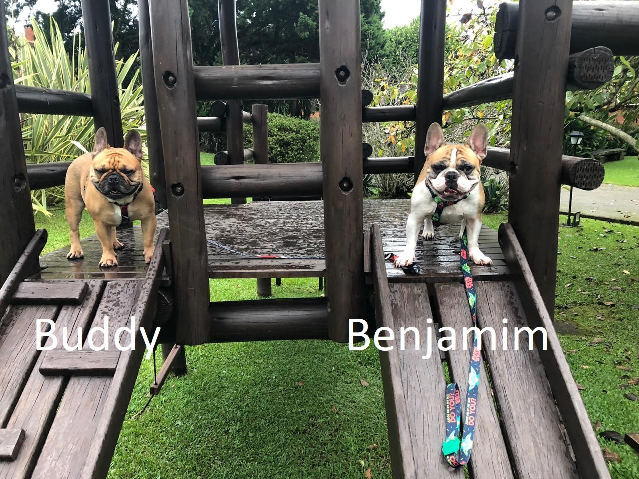 Buddy e Benjamim