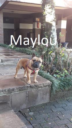 Maylou