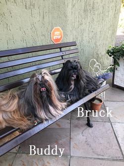 Bruck e Buddy.5