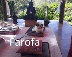 Farofa (00000002)