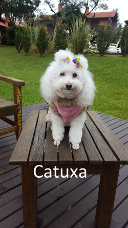 Catuxa