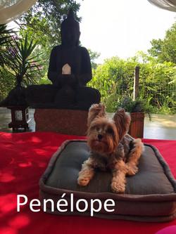 Penélope.1