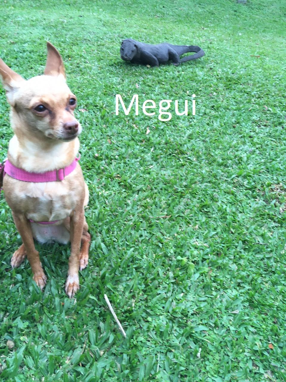 Megui