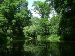 bosque, lago, Polonia