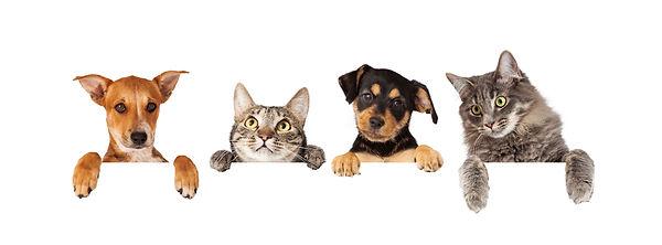 Pet Show.jpg
