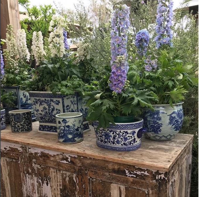 blue and white planter collection
