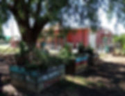 nagambie-primary-school-kitchen-garden-3