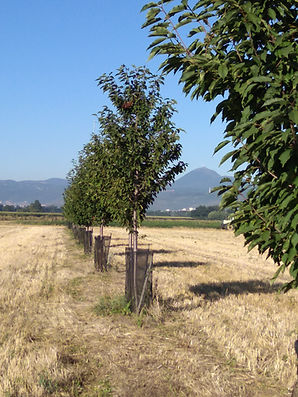 agroforesterie Les Raux 1.jpg