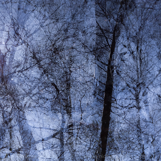 Limited edition fine art prints: The Reflecting Pool - birch trees reflected in water; in camera multiple exposure