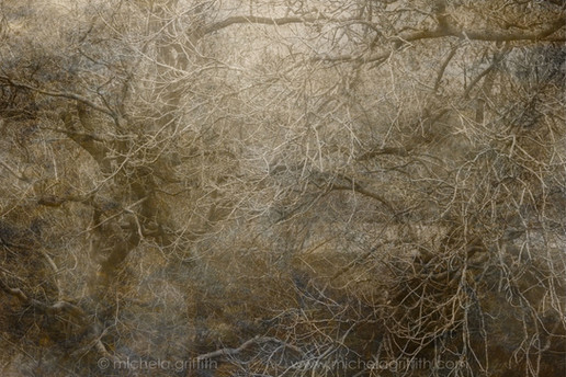 Relationships are formed, dalliances across the water: dusky willow and fair ash