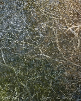 A complex pattern of growth: branches and twigs from trees along the River Dove weave over pastel colours from the water