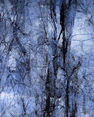 A multiple exposure of birch trees (Betula pendula) reflected in water under a clear sky, black on blue.