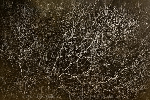 A bramble thicket of willow catches the late sun and slices open the darkening void