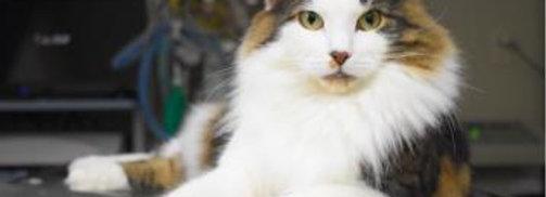 我が家の愛猫を守る!猫の救急医療セミナー